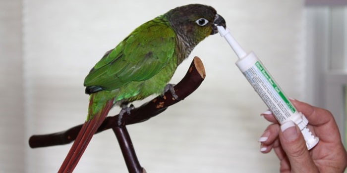 Birds Wellness Care