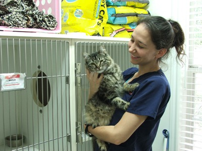 All Pets Medical Center Cats and Kittens Wellness & Care