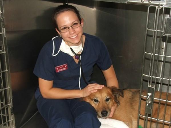 All Pets Medical Center Internal Medicine Hospital Services