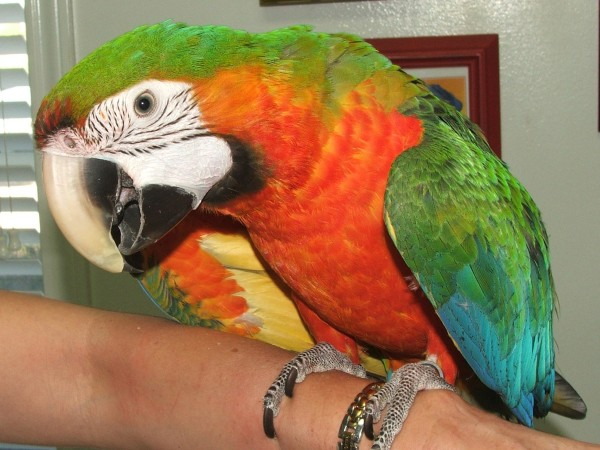 Birds Wellness And Care All Pets Veterinary Medical Center