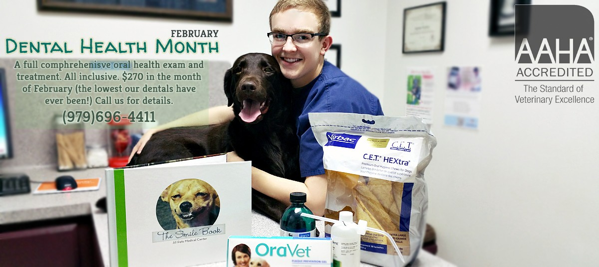 Yearly dental cleanings are one of the best preventative measures that you can take for your pet's dental health.